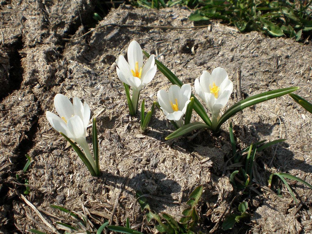dal letame nascono i fiori