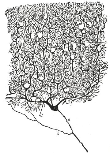schemi interferenza ologramma dendriti