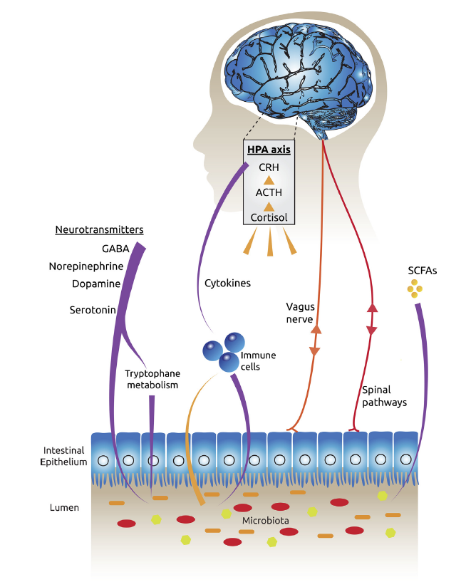 intelligenza sciame microbiota