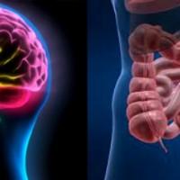 Parkinson Capasso bioexplorer