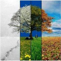 stagione malattia bioexplorer